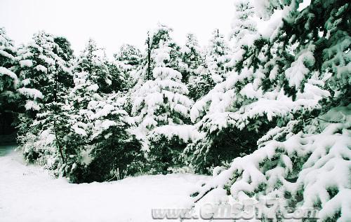 峨眉山的雪