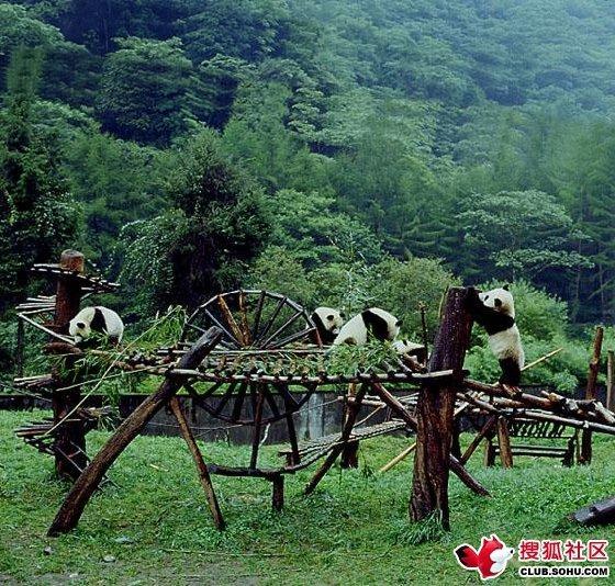 卧龙大熊猫栖息地