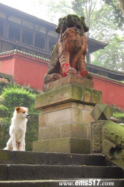 峨眉山庙前的狗狗