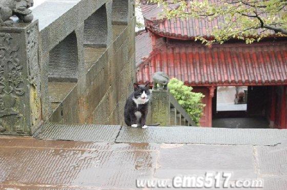 峨眉山上的猫猫