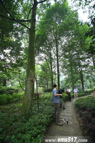 走遍中国,走进峨眉。央视摄制组在峨眉山万年寺生物站植物苑。
