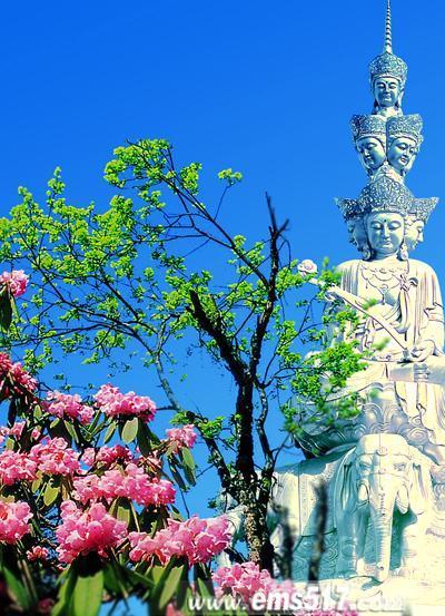 四月份,正是春光明媚的日子,更是峨眉山高山杜鹃盛开的好时节