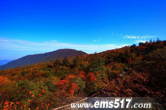 金秋十月,西博会召开之际,峨眉山红叶红了。